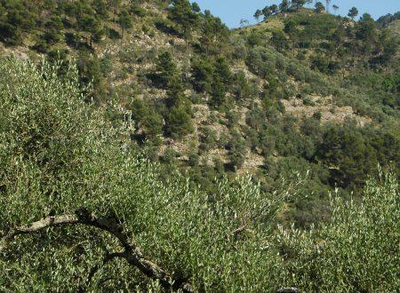 Collabassa, Frazione di Airole (IM), colline sulla Val Bevera