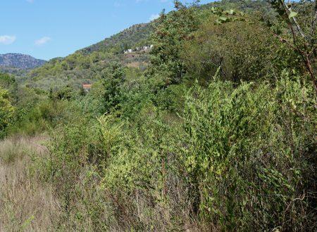 Olivetta San Michele (IM) – scorcio di Val Bevera