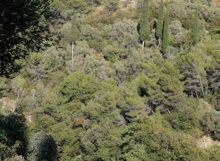Borghetto San Nicolò, Frazione di Bordighera (IM): una vista sulla vallata del torrente Borghetto