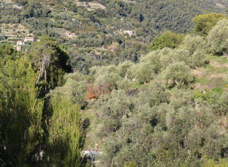Vallebona (IM), Località Gavaudan: una vista sulla vallata del torrente Borghetto