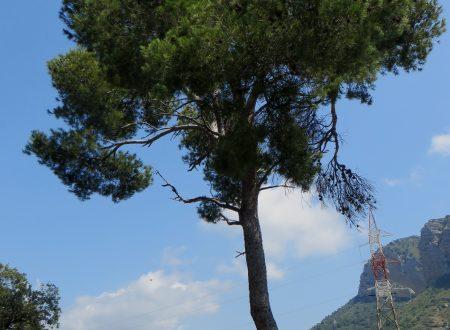 Ventimiglia (IM): Località Santo Stefano