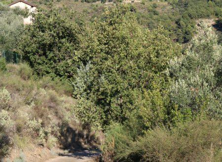 Dolceacqua (IM): Località San Gregorio